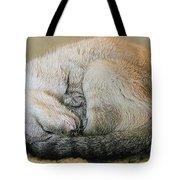 Snugglepuss Tote Bag by Kristin Elmquist