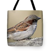 Sparrow Tote Bag by Melanie Viola