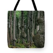 Spruce Burls Olympic National Park Wa Tote Bag by Christine Till