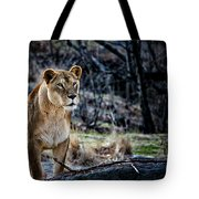 The Lioness Tote Bag by Karol  Livote