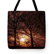 Trees At Sunset Tote Bag by Michal Boubin