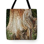 Trees On The Trails - Olympic National Park Wa Tote Bag by Christine Till