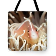 Tropical Fish Pink Clownfish Tote Bag by MotHaiBaPhoto Prints