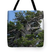 Twisted And Gnarled Bristlecone Pine Tree Trunk Above Crater Lake - Oregon Tote Bag by Christine Till