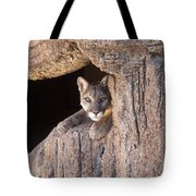 Watchful Eyes Tote Bag by Sandra Bronstein