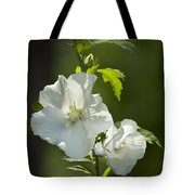 White Rose Of Sharon Squared Tote Bag by Teresa Mucha