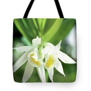 White Thunia Tote Bag by Indian School