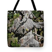 Whitebark Pine Tree - Iconic Endangered Keystone Species Tote Bag by Christine Till