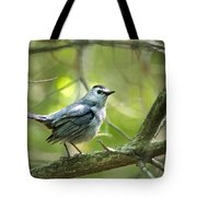 Wild Birds - Gray Catbird Tote Bag by Christina Rollo