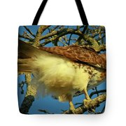 Young Red-tail Tote Bag by Phill  Doherty
