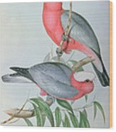 Birds Of Asia Wood Print by John Gould