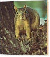 Fox Squirrel Wood Print by Robert Bales