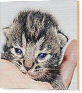 Kitten In A Hand Wood Print by Susan Leggett