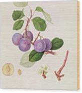 La Royale Plum Wood Print by William Hooker