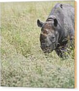 Black Rhinoceros Diceros Bicornis Michaeli In Captivity Wood Print by Matthew Gibson