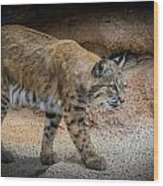 Bobcat Wood Print by Elaine Malott