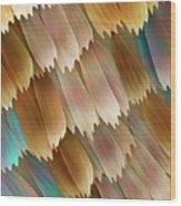 Butterfly Wing Scales Wood Print by Power And Syred