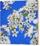 Cherry Blossom With Blue Sky Wood Print by Raimond Klavins