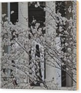 Cherry Blossoms With Jefferson Memorial - Washington Dc - 01131 Wood Print by DC Photographer