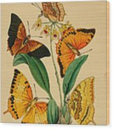 Chinese Butterflies 1847 Wood Print by Philip Ralley