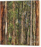 Dandenong Forest Wood Print by Colin Woods