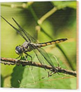 Dragonfly Wood Print by Steven  Taylor