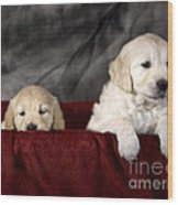 Golden Retriever Puppies Wood Print by Angel  Tarantella