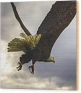 Great American Bald Eagle In Flight Homer Alaska Wood Print by Natasha Bishop