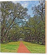 Oak Alley 3 Wood Print by Steve Harrington