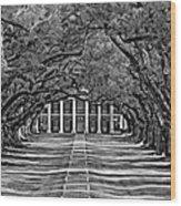 Oak Alley Bw Wood Print by Steve Harrington