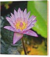 Purple Lotus  Wood Print by Raimond Klavins