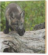 Red Fox Kit Wood Print by Sandra Bronstein