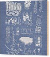 Salwater Algae Wood Print by Aged Pixel