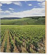 Vineyard Of Cotes De Beaune. Cote D'or. Burgundy. France. Europe Wood Print by Bernard Jaubert