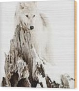 Arctic Wolf Pup Wood Print by Wolves Only