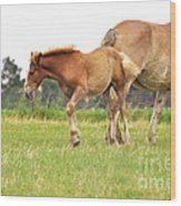 A Mare And Her Colt Wood Print by Penny Neimiller