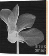 Cyclamen Flower X-ray Wood Print by Bert Myers