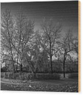 hoar frost covered trees on street in small rural village of Forget Saskatchewan Canada Wood Print by Joe Fox