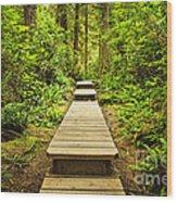Path In Temperate Rainforest Wood Print by Elena Elisseeva