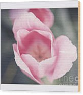 Pink Tulip  Wood Print by Artist and Photographer Laura Wrede