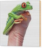 Red-eyed Tree Frog Agalychnis Callidryas Wood Print by Corey Hochachka