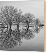 Reflection Wood Print by Tom Druin