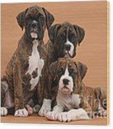 Three Boxer Puppies Wood Print by Mark Taylor