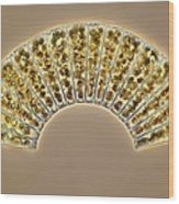 Diatoms, Light Micrograph Wood Print by Science Photo Library