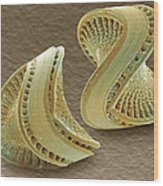Diatoms, Sem Wood Print by Power And Syred