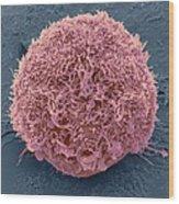 Mesenchymal Stem Cell, Sem Wood Print by Science Photo Library