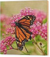 Monarch Butterfly Wood Print by Carol Toepke