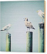 3 Seal Gulls Wood Print by Dick Wood