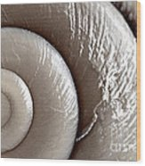 Seashell Detail Wood Print by Elena Elisseeva