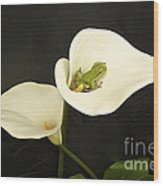Pacific Tree Frog Wood Print by Sean Griffin